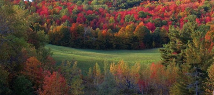 20) And one final pic of just how amazing the foliage is in this state, by Todd Rojecki.