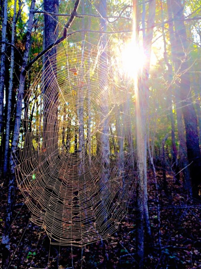 18. Jerry Hoerdt took this picture near the Mississinewa Reservoir. I don't know about you, but I don't want to meet the spider that made this...