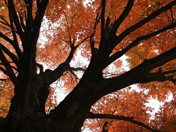 """10. """"Don't forget to look up during fall in Kansas."""""""