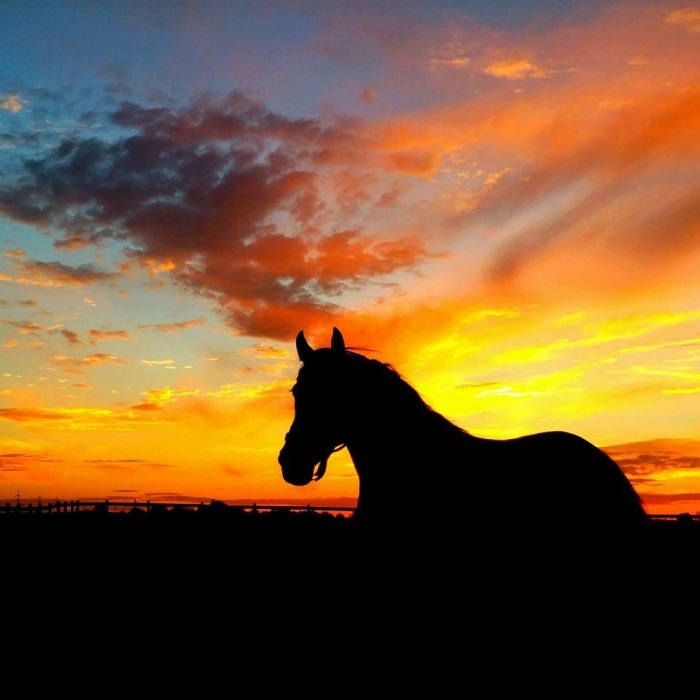 """16. """"Mustang Sunset"""" in South Bloomfield, OH"""