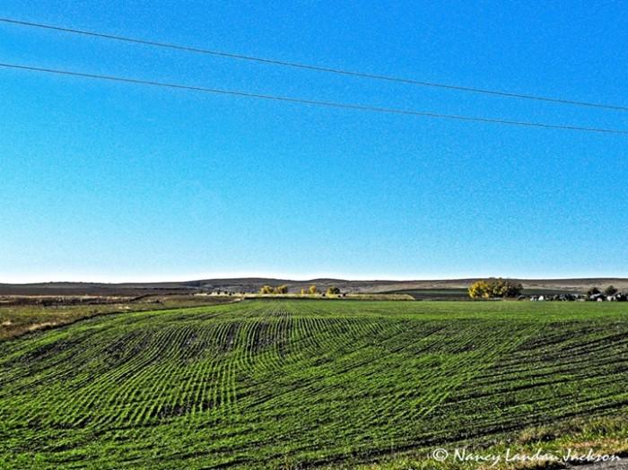"9. ""Winter Wheat in Rawlins Co."""