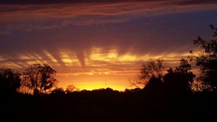 11. Cathy Trumm captured a photo of this radiant sunrise near Viola.