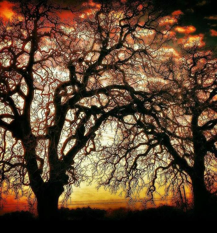 5) These creepy trees look perfect for Halloween, don't you think? Taken in Shiner by Kenneth Wright.