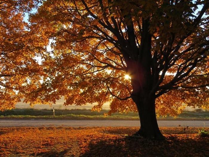 12. Kelly Gerke took this beautiful fall photo north of Saint Anthony.