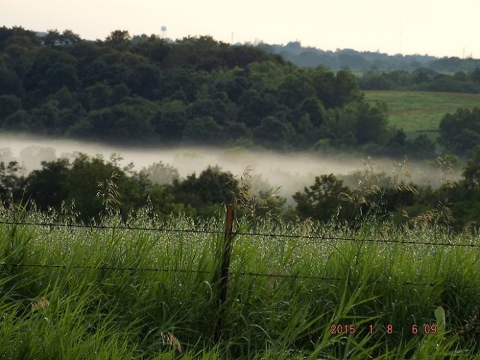 14. Toni Boardman took this gorgeous photo of a foggy morning field.