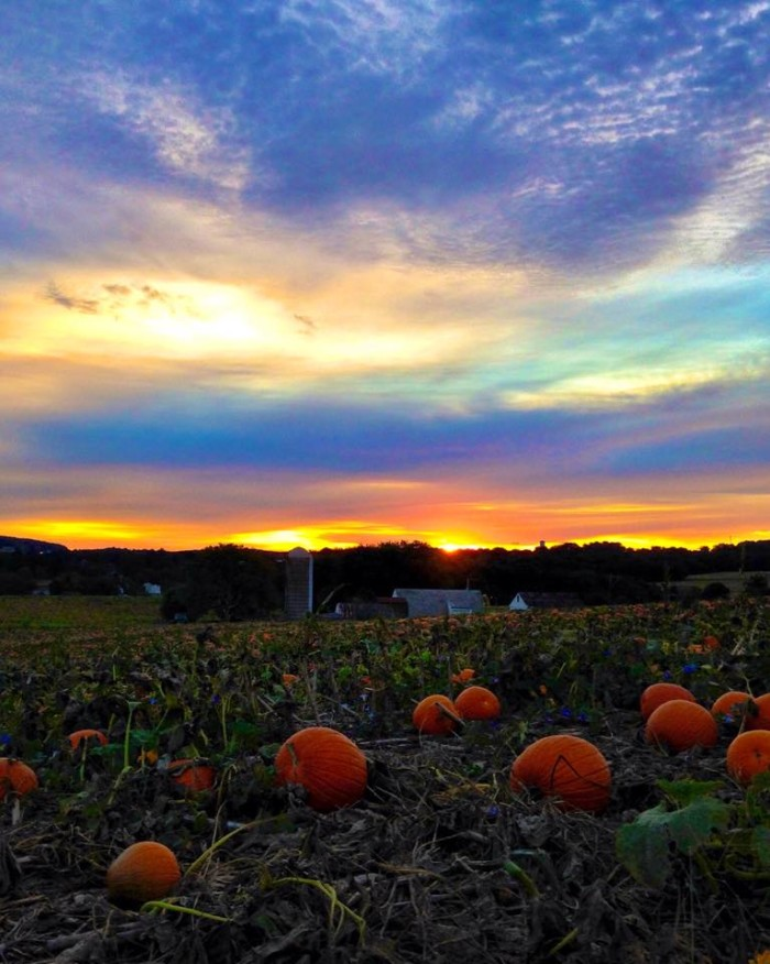 13. What a gorgeous shot of a pumpkin patch in Lancaster County.