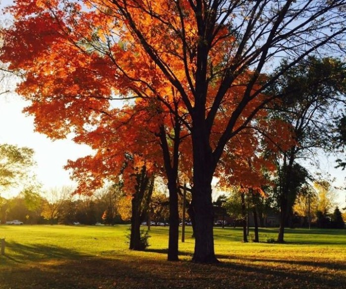 20. Damaris Torres Olga took a beautiful shot of this golden hour foliage in Mississippi Point Park.
