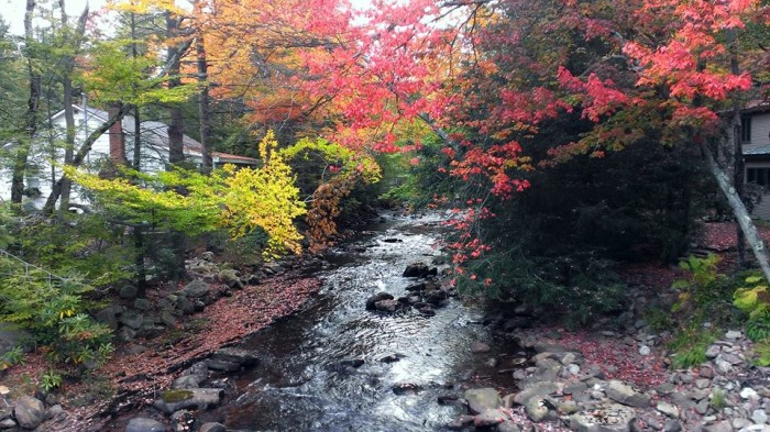 19. The leaves are turning vibrant colors at Mud Run Creek in Albrightsville.