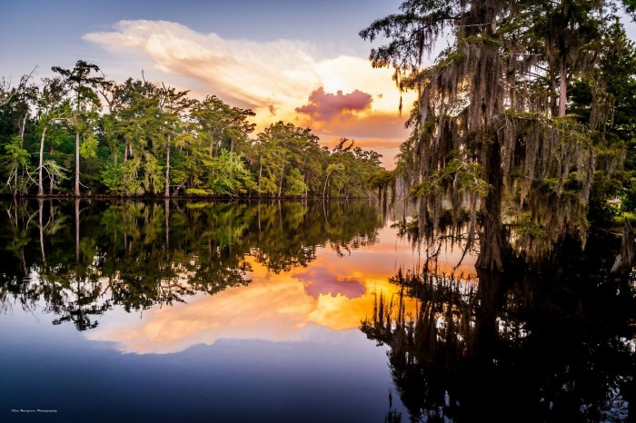 4) Quiet Morning at Sam Houston State Park, Moss Bluff. By Clint Musgrove