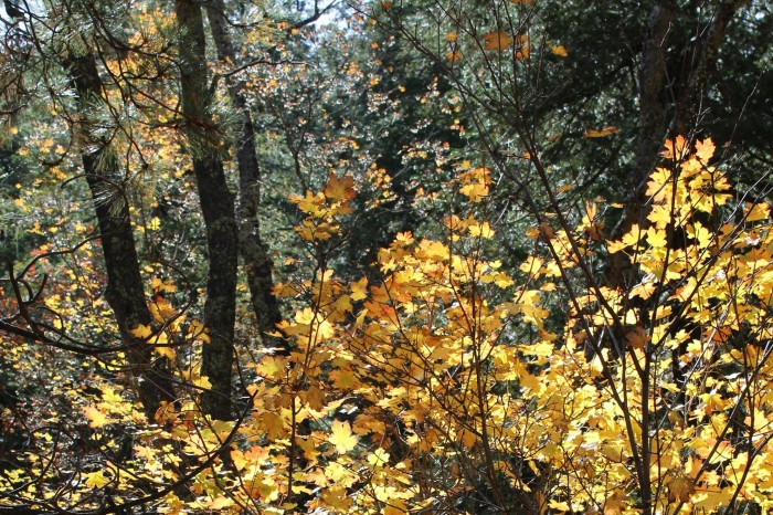 10. Here is a photo from Nibia who was looking for some evidence of fall foliage at Mount Lemmon. Looks like she found it!
