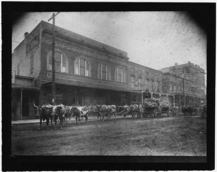 13. A team of oxen pull a carriage carrying supplies through Brookhaven.