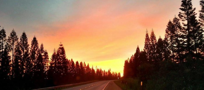 13) A drive along Kamehameha Highway towards Wahiawa transports you to another setting entirely – I mean, do those pine trees scream Hawaii to you? I think not.