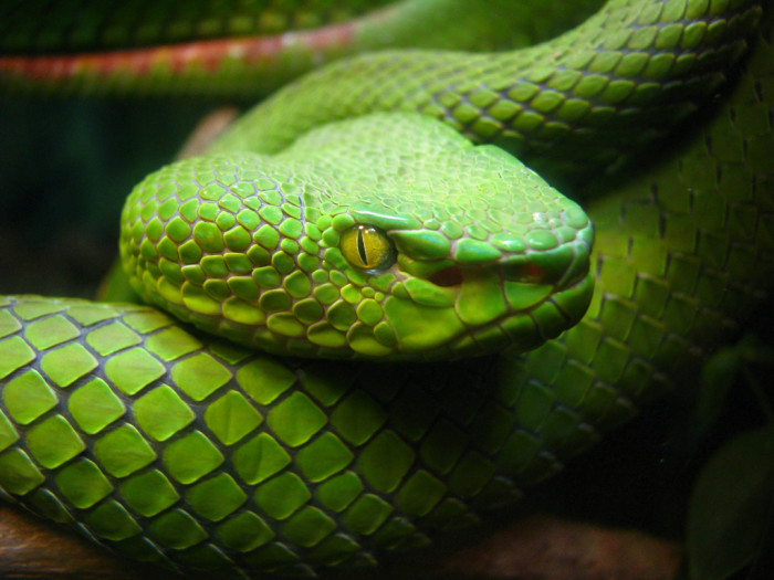 13) Lack of snakes.