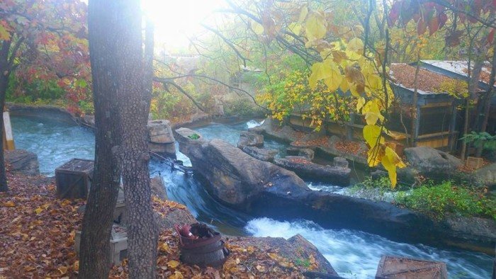 """14. Debra Brannon says, """"I took this picture today overlooking the Lost River of the Ozarks ride at Silver Dollar City in Branson, MO. If you didn't know any better, you might think it was a secluded cabin in the woods, surrounded by a creek. The fall foliage is gorgeous."""""""