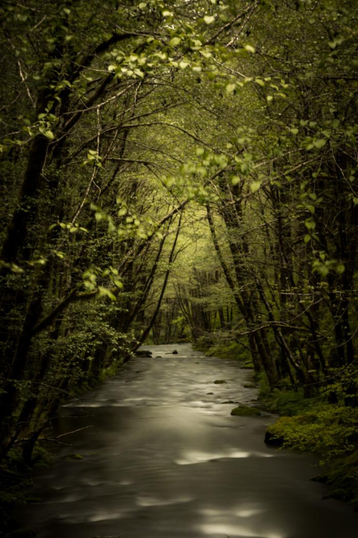 6) Wilson River