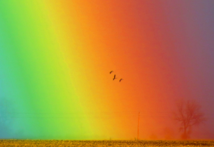3. Another gorgeous shot from the wetlands, these birds happened to fly through one of MN's most amazing rainbows!
