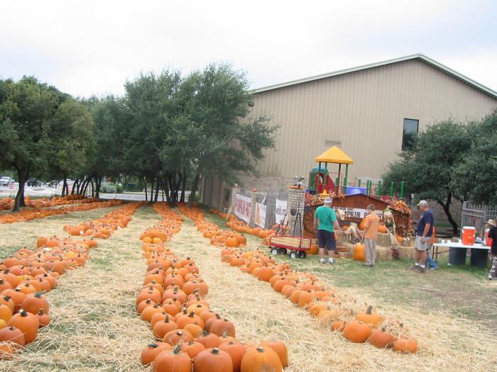 7) Northwest Hills United Methodist Church Pumpkin Patch (San Antonio)