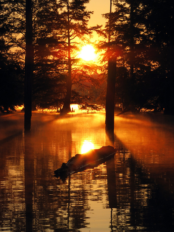 15. A tranquil sight photographed by Roger Smith at the Noxubee National Wildlife Refuge, near Starkville.