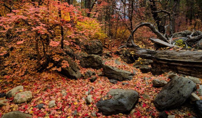 5. See the beautiful fall colors in Arizona's central region.