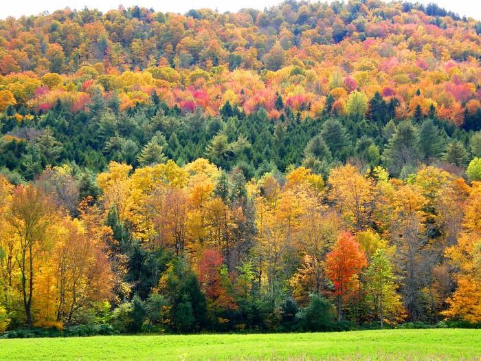 1. Foliage Season.