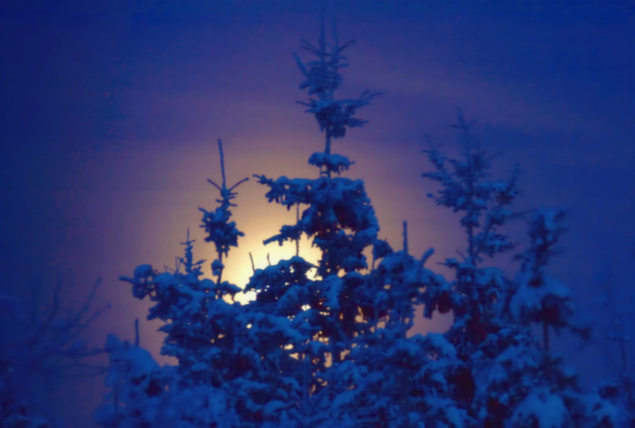 8) The moon glowing through dancing snowflakes and spruce bows.