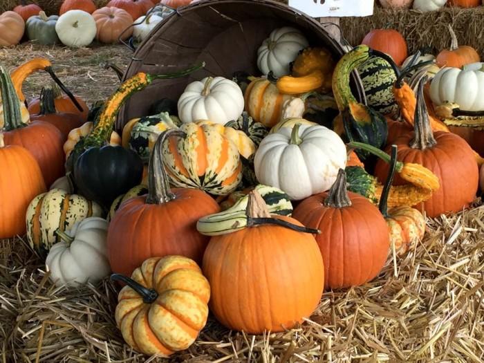 15.Perryville Pumpkin Farm, Perryville