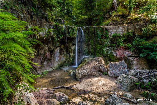9) A Waterfall At Clark Creek by Tammy Meyers Robin.