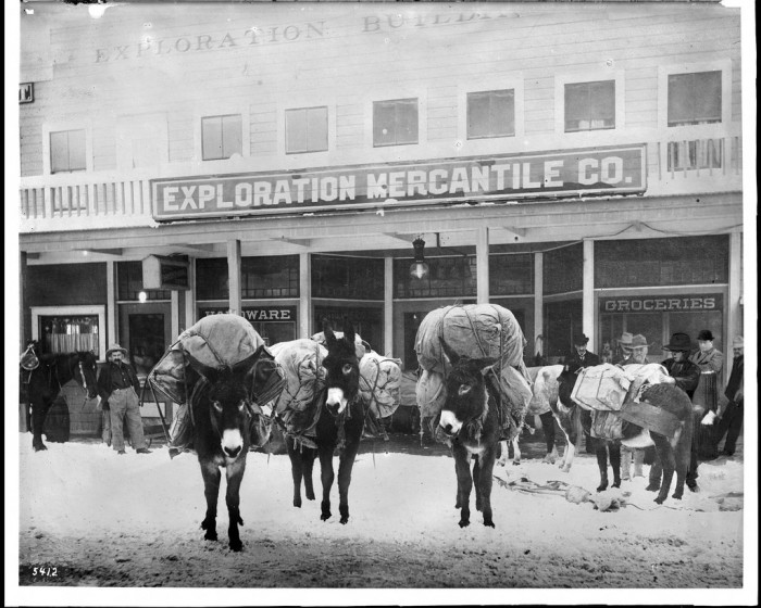 7. A group of miners' pack animals in front of mining supply stores in Goldfield, Nevada, circa 1900.