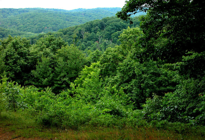9. Scioto Trail State Forest (Ross and Pike counties)