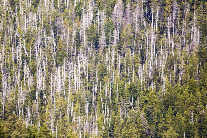 9) An aerial look at an Alaskan Boreal Forest.