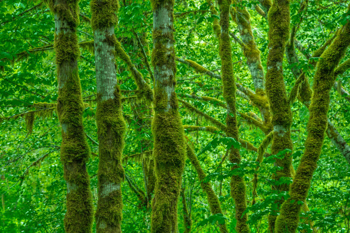 3) Clatsop State Forest