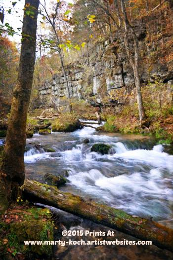 18.  This photo of Greer Spring was taken by Marty Koch.