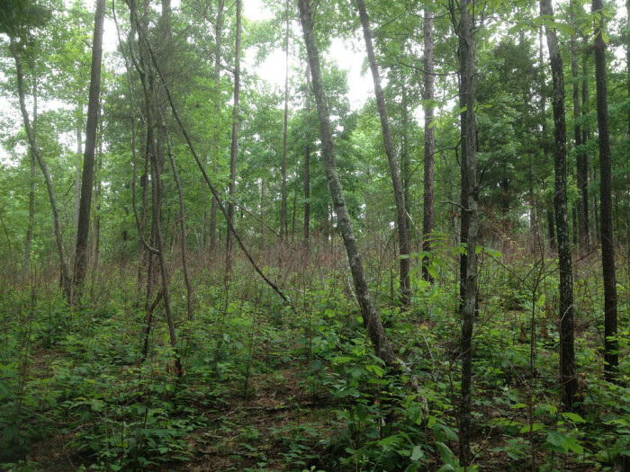 2. Bankhead National Forest - Lawrence, Winston and Franklin Counties