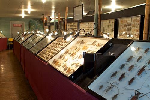 9. May Natural History Museum (Colorado Springs)