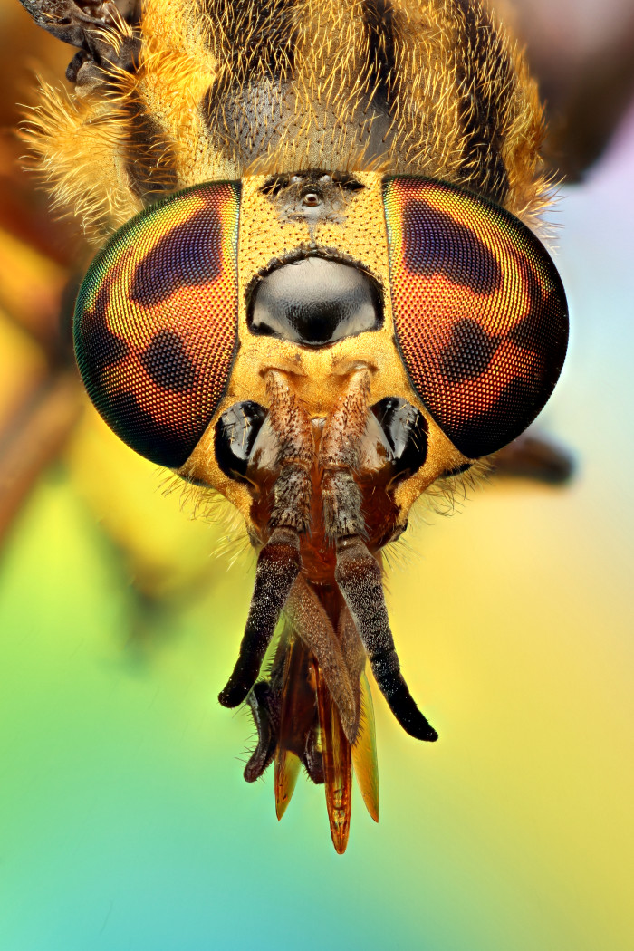 1) This close-up of a deer fly in Corinth.