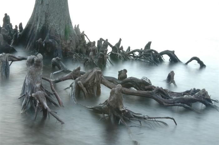 """6. """"Anthropomorphic Roots"""""""