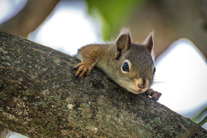 10) This adorable squirrel.