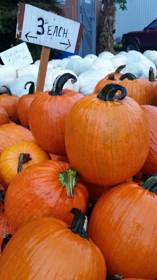 2. Papa Charlie's Pumpkin Patch, Chillicothe