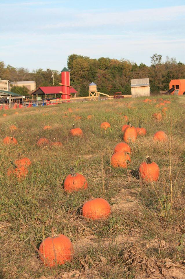 19.Pete's Pumpkin Patch, Rolla