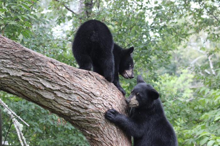 2. Bears