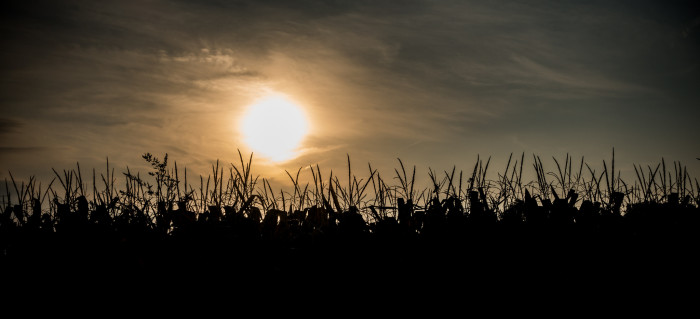 3. This is somewhere in Delaware, Indiana. The sun does a fantastic job of making the cornfield captivating and mysterious!