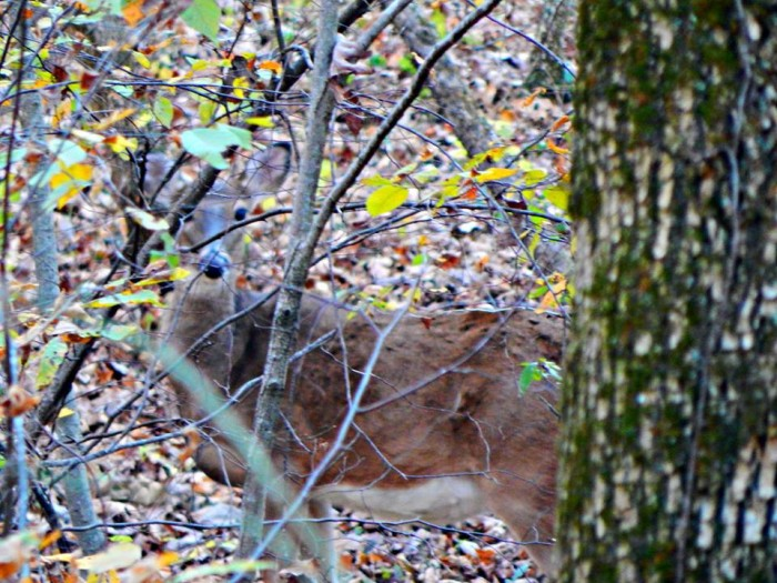 21. You almost don't even see the deer in this amazing shot by John Albert Christeson at St. Joe Park.