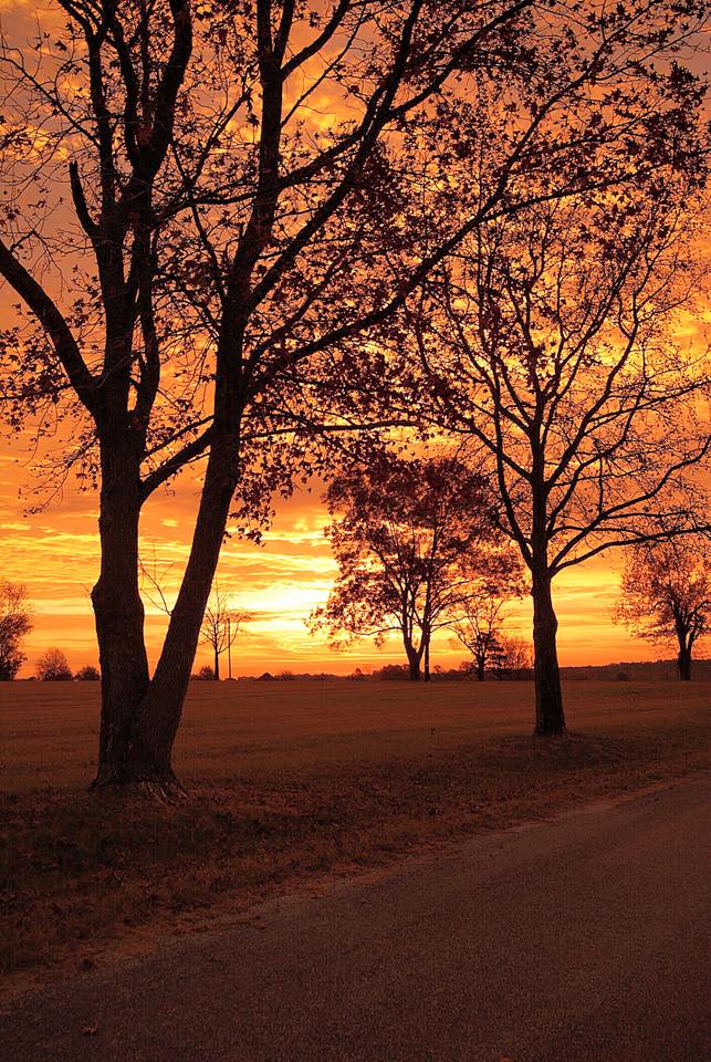 2. A Thaxton sunrise, captured by Luis Aburto, paints the sky with vibrant orange and yellow hues.
