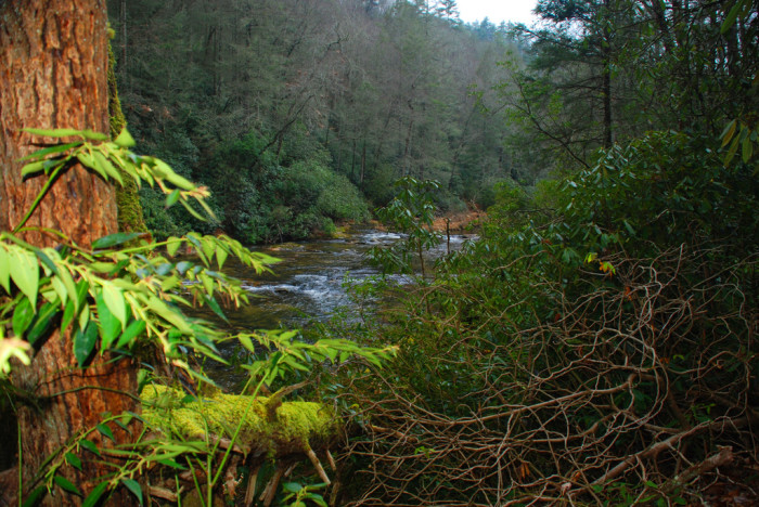 5. Poe Creek State Forest
