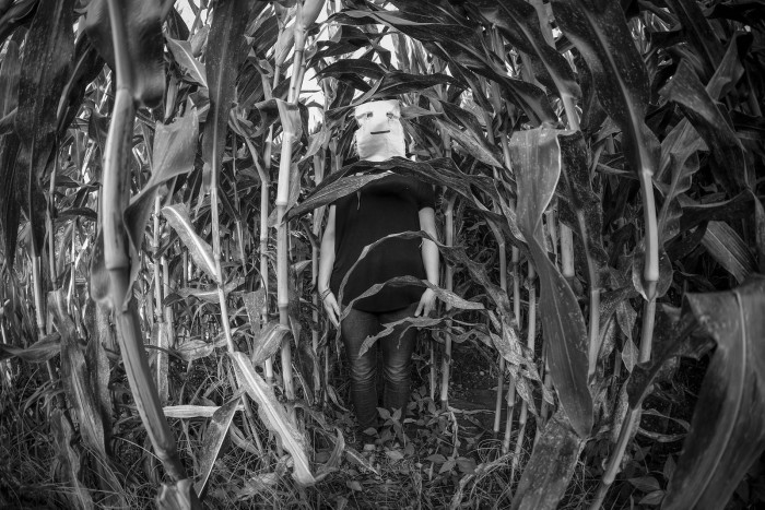 2. Even spookier is the thought of what may be lurking in those corn fields, just waiting for you.