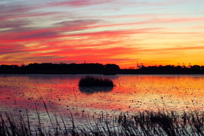 5.  Savannah National Wildlife Refuge