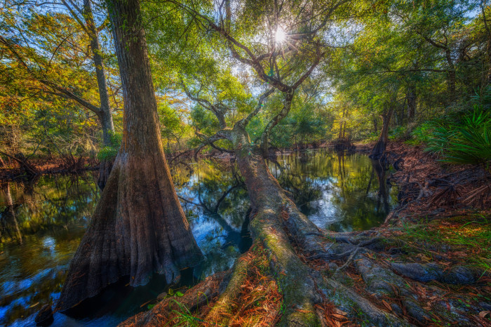 14. Tree Over the Withlacoochee River