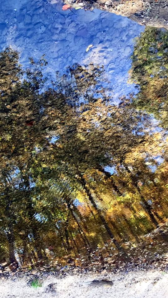 """23. Irene Kelley Bateman says, """"the trees reflections looking down into the rippling water gives this picture the look of a painting."""" Taken at Mastadon State Park."""