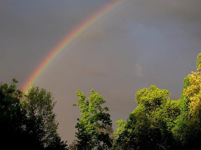 "3. ""Rainbow Over Schneck Forest."""