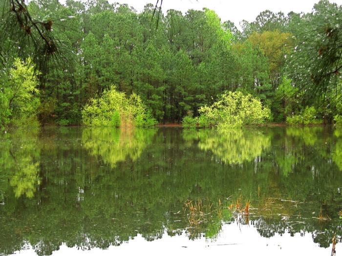 4. Carolina Bays